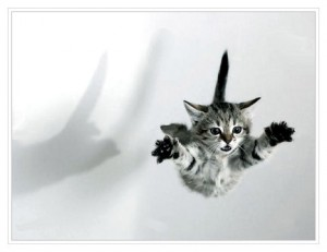 falling kitten